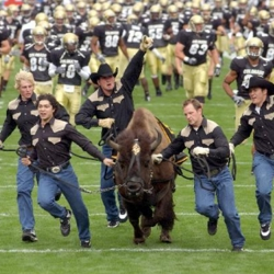 University of Colorado mascot Ralphie
