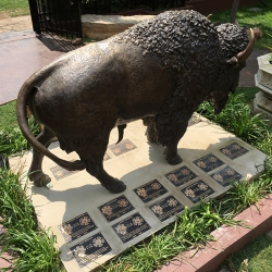 buffalo-with-plaques-1.JPG